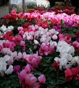 Flower market Delectable Destinations Paris Gourmet Travel