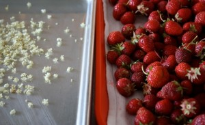 Fresh Strawberries Food Styling Photography Workshop