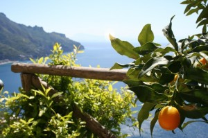View of the coast from orange grove Delectable Destinations Amalfi Coast Culinary Adventure Carol Ketelson