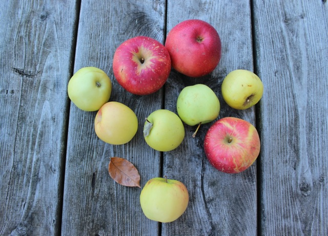 Autumn Apples for Jodie's Thanksgiving Apple Spice Cake Delectable Destinations Carol Ketelson