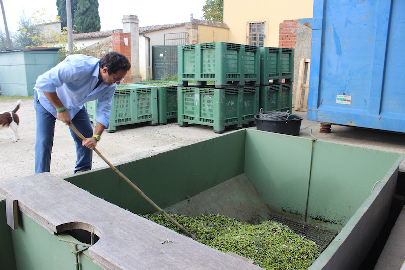 Frantoio in Chianti Region of Tuscany - Tuscan Olive Oil Harvest - Delectable Destinations Culinary Tours - Delecatble Destinations