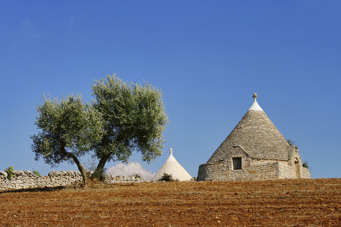 Take a walk amongst these ancient Secular olive trees - Discovering Puglia Luxury Travel - Delectable Destinations - Carol Ketelson