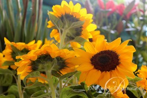 Sunflowers in Tuscany - Tuscany Food Styling Photography - Delectable Destinations -Carol Ketelson