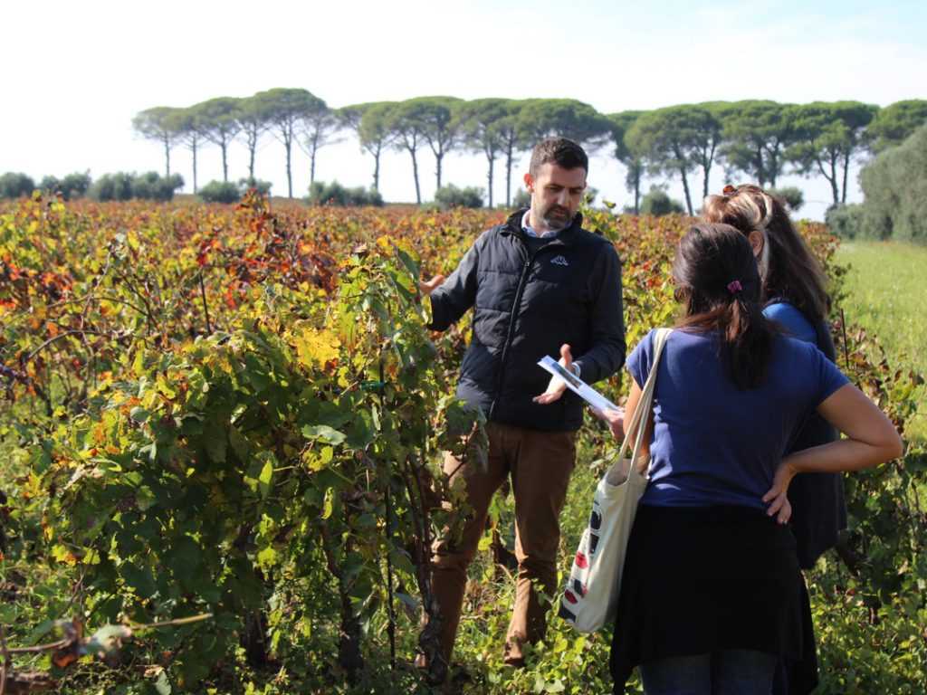 vinyard Puglia Italy Carol Ketelson Delectable Destinations Culinary Tours