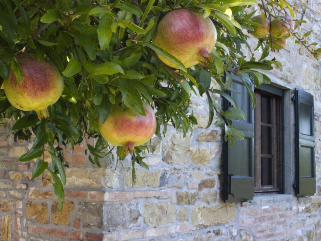 Villa la Quercia Tuscany Italy Carol Ketelson Delectable Destinations Culinary Tours