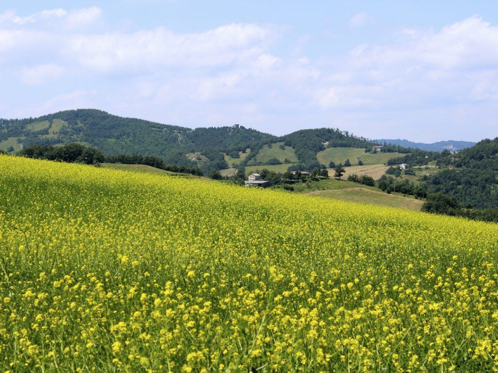 rolling hills of Marche Italy Carol Ketelson Delectable Destinations Culinary Tours