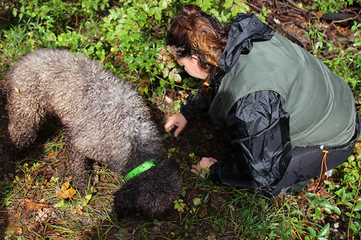 Truffle Hunting with Dogs in San Miniato, Chianti, Tuscany - Delectable Destinations Culinary Tour Carol Ketelson