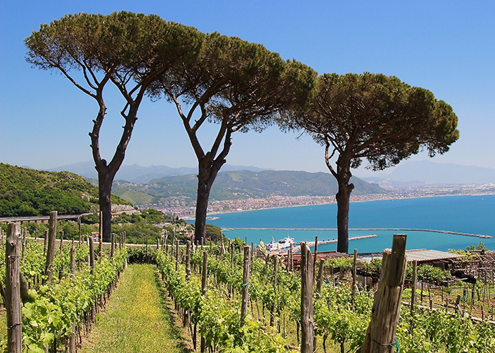 Le Vigne di Raito - Vineyards with a view - overlooking Vietri Sul Mare and the Bay of Salerno - Amongst vines vigne di raito Delectable Destinations Carol Ketelson Amongst vines vigne di raito
