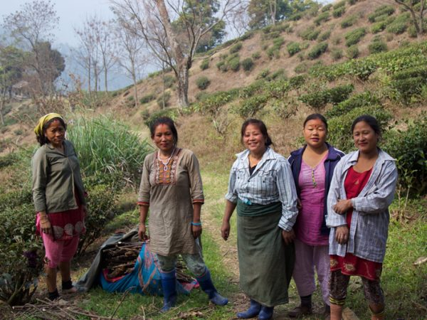 The warm and kind ladies of Darjeeling - Tea pickers at Glenburn Tea Estate, India - Carol Ketelson, Delectable Destination